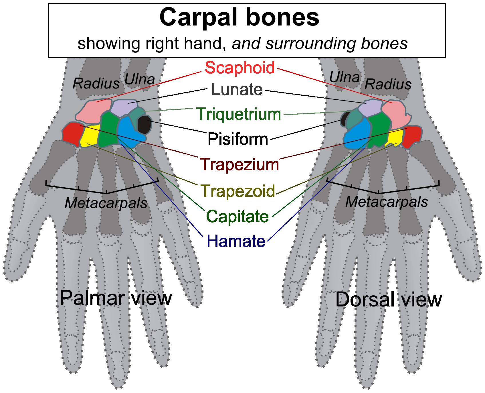 Names Of Bones  Letters