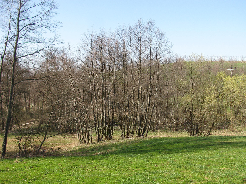 Buchbach (Naturschutzgebiet)