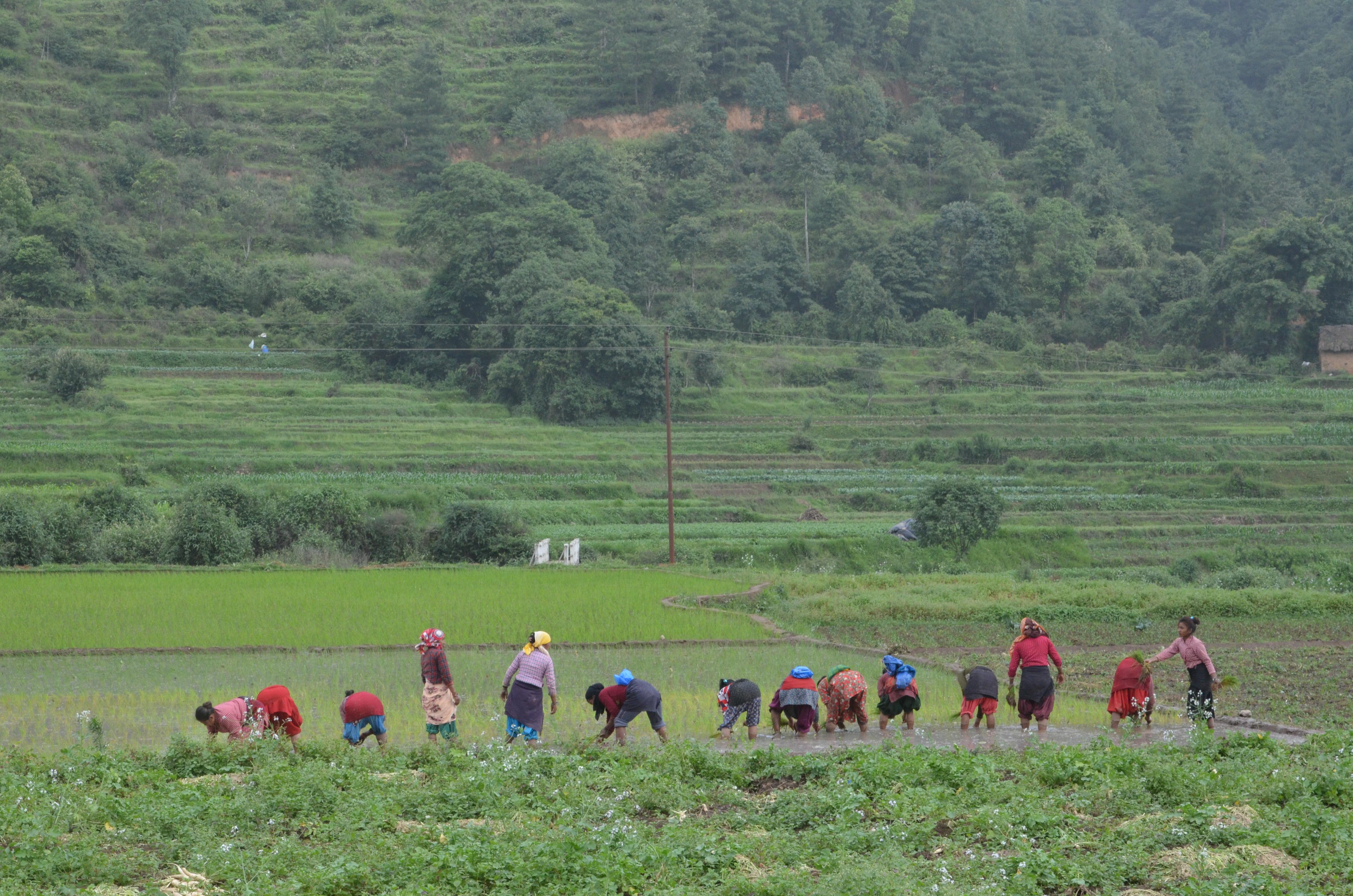 File:Farming in Nepal jpg - Wikimedia Commons