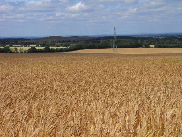 Farmland, Crondall - geograph.org.uk - 2123937