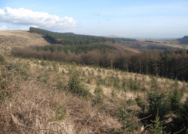 Forestry on the southern slopes of Mynydd Penhydd and Pen Disgwylfa - geograph.org.uk - 1733249