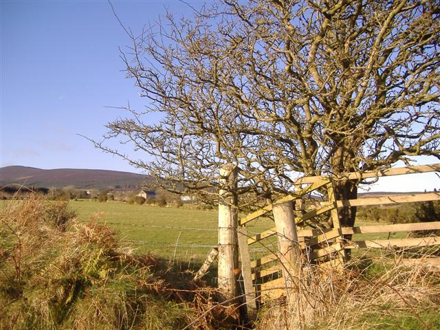 Gibdale. Looking north west from the B 30 road, Barrule in the background