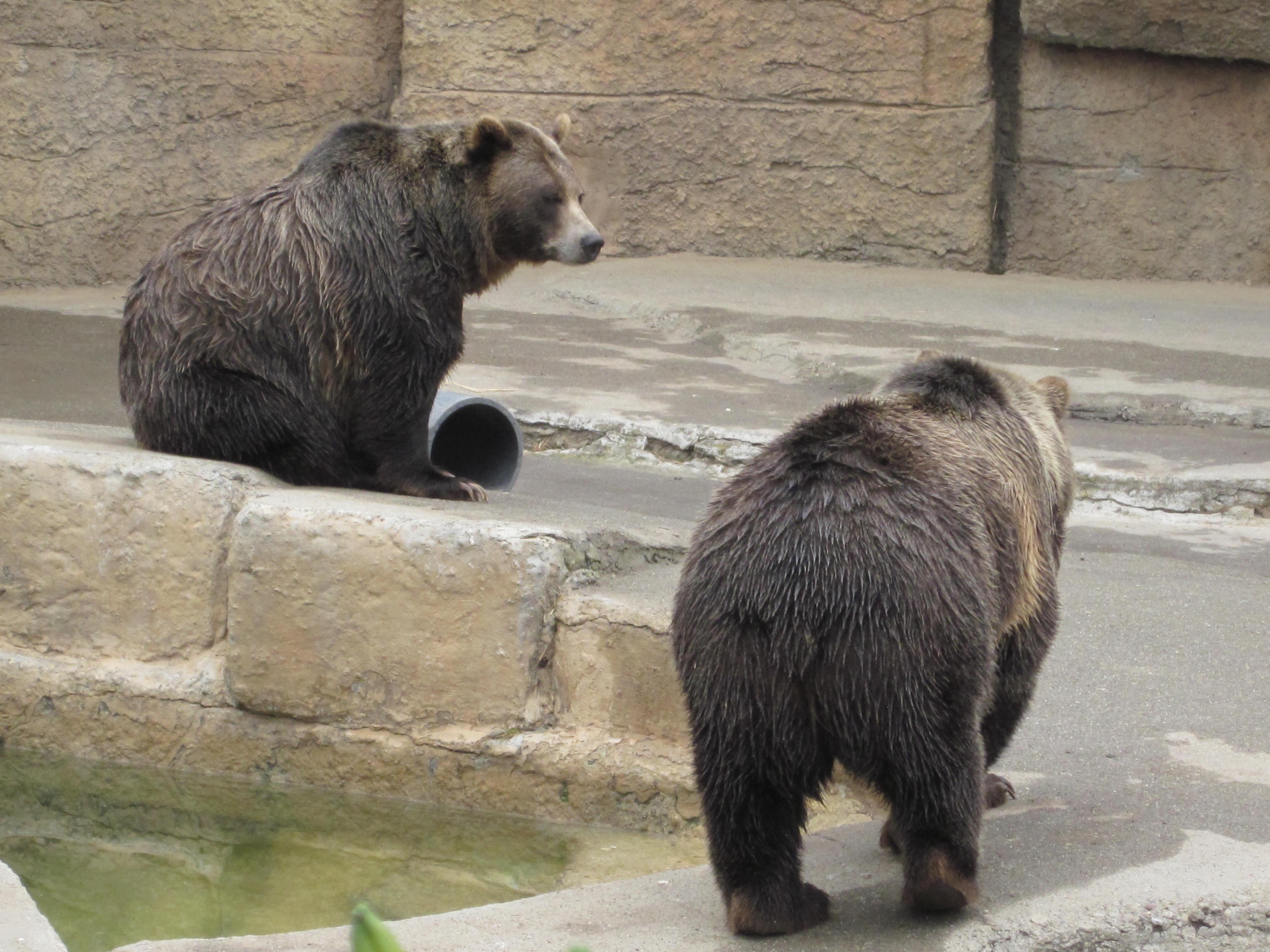Bears Are Like Dogs