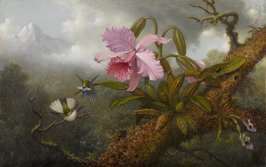 Мартин Джонсон Хид - Орхидея Каттлея, две колибри и жук - 2010.67 - Музей хрустальных мостов Америки Art.jpg