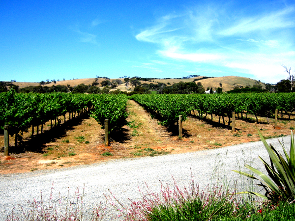 McLaren Vale vineyard
