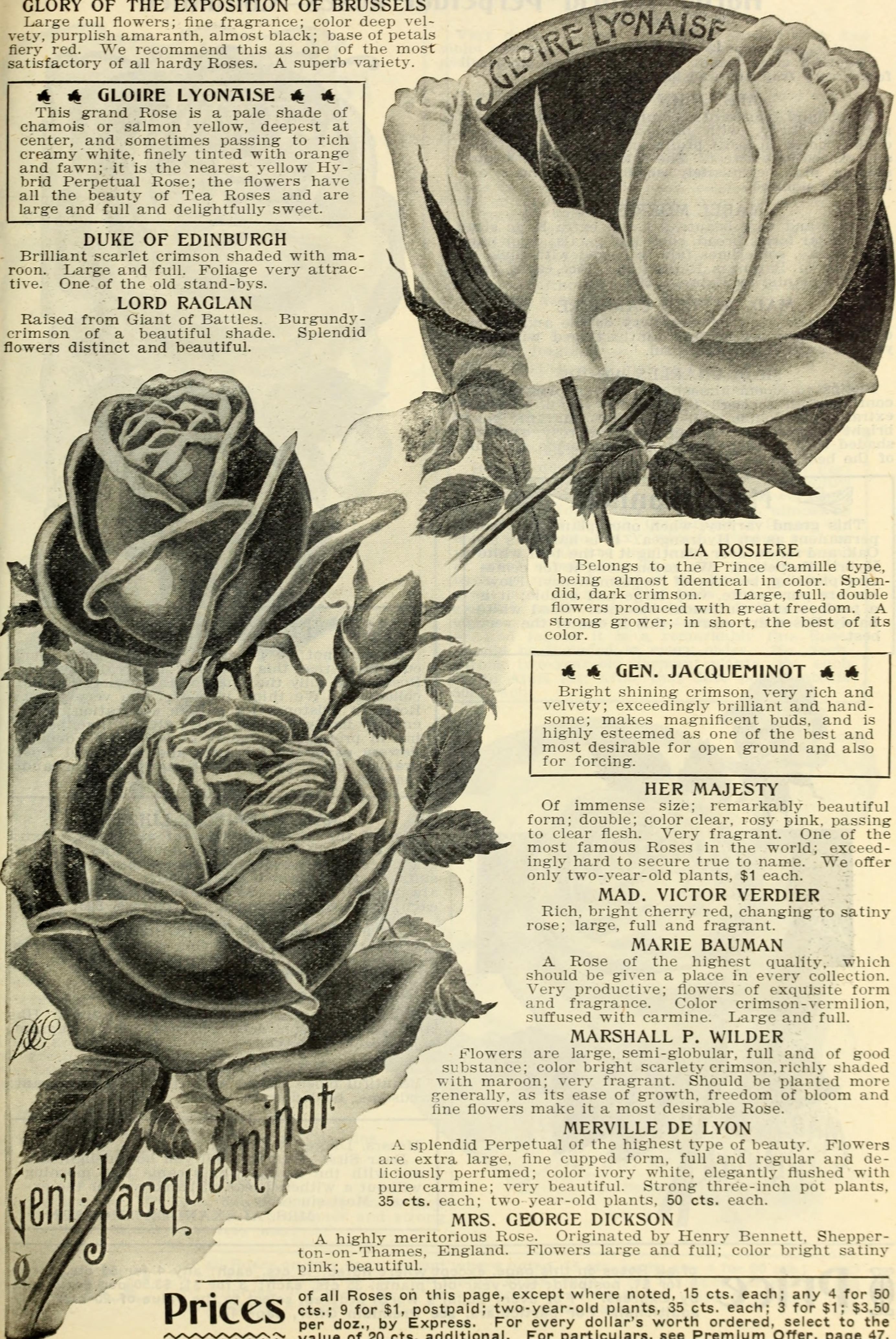 Fileour new guide to rose culture 1906 1906 14780054032g fileour new guide to rose culture 1906 1906 14780054032 izmirmasajfo