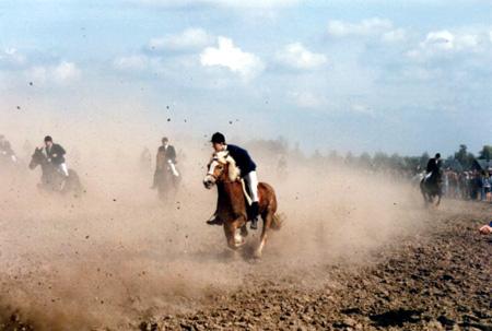Paarden hakendover