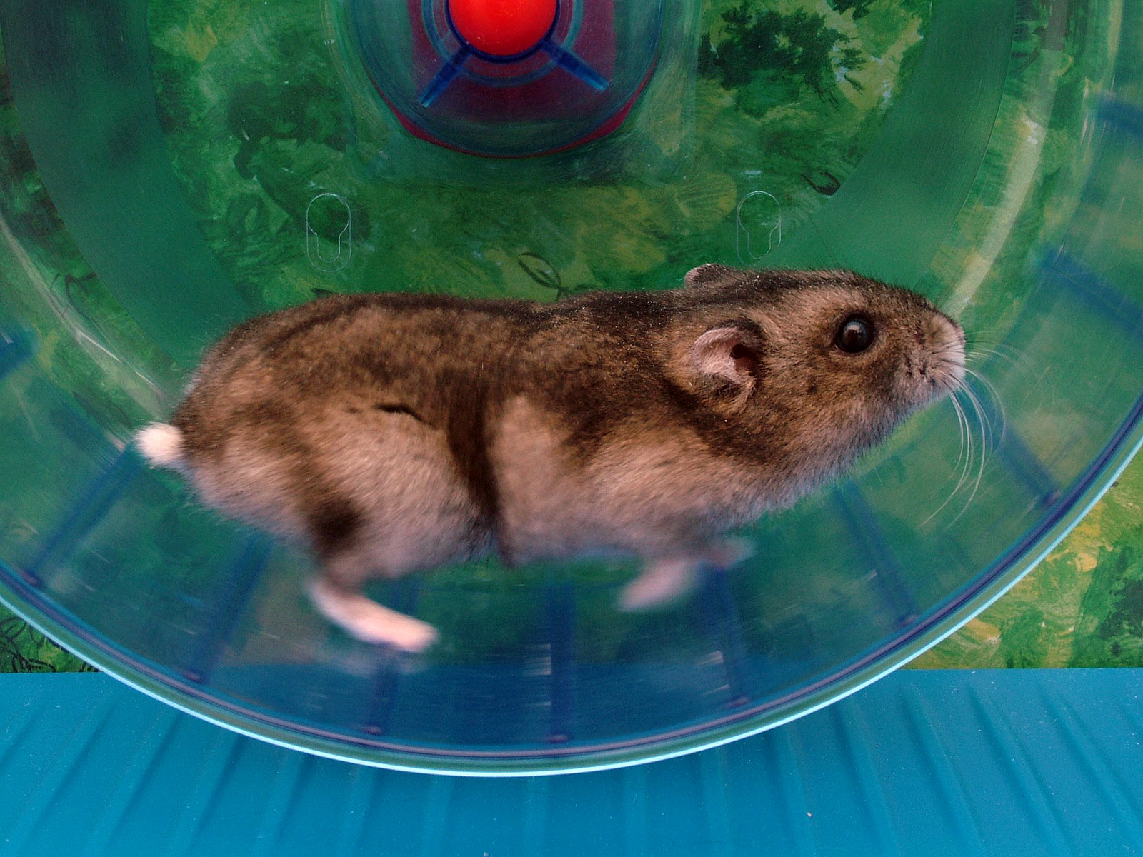 Image result for hamster wheel
