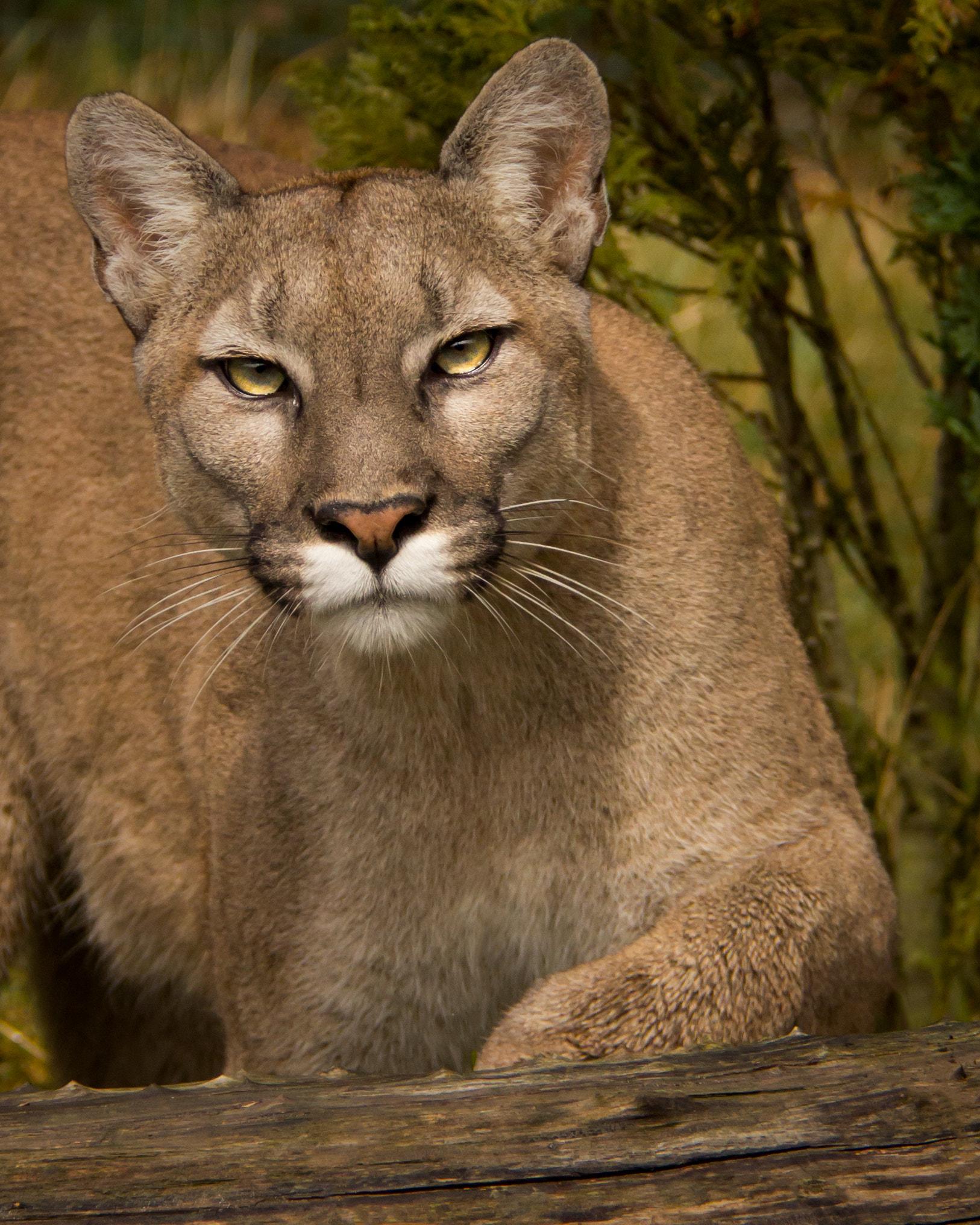 Online seznamky cougars