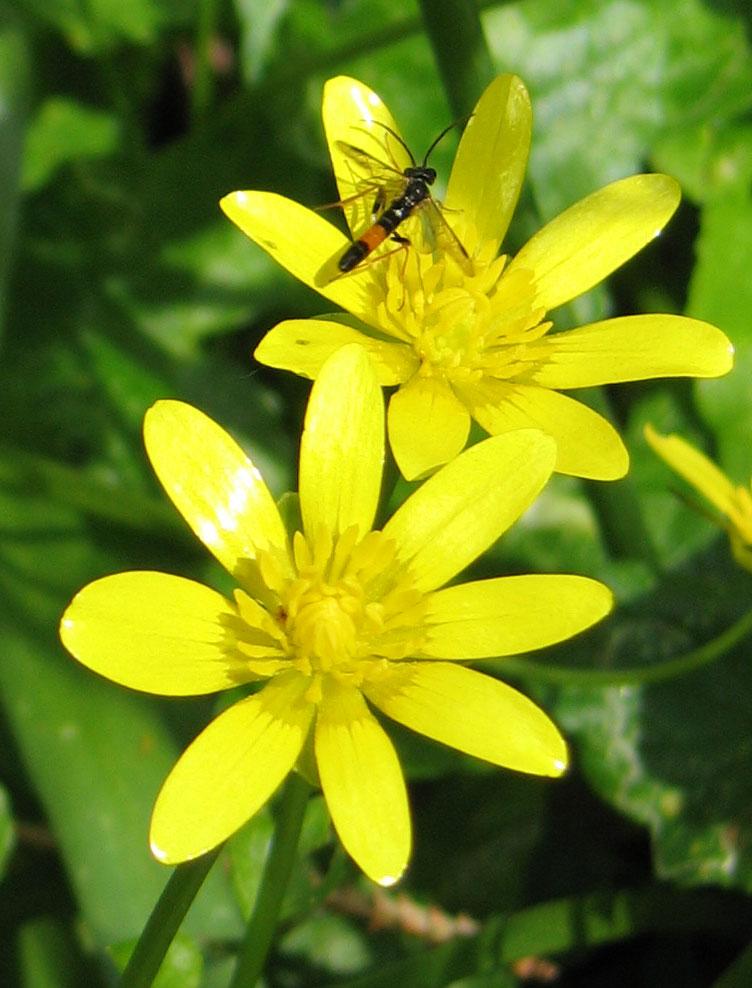 Bloemen-planten