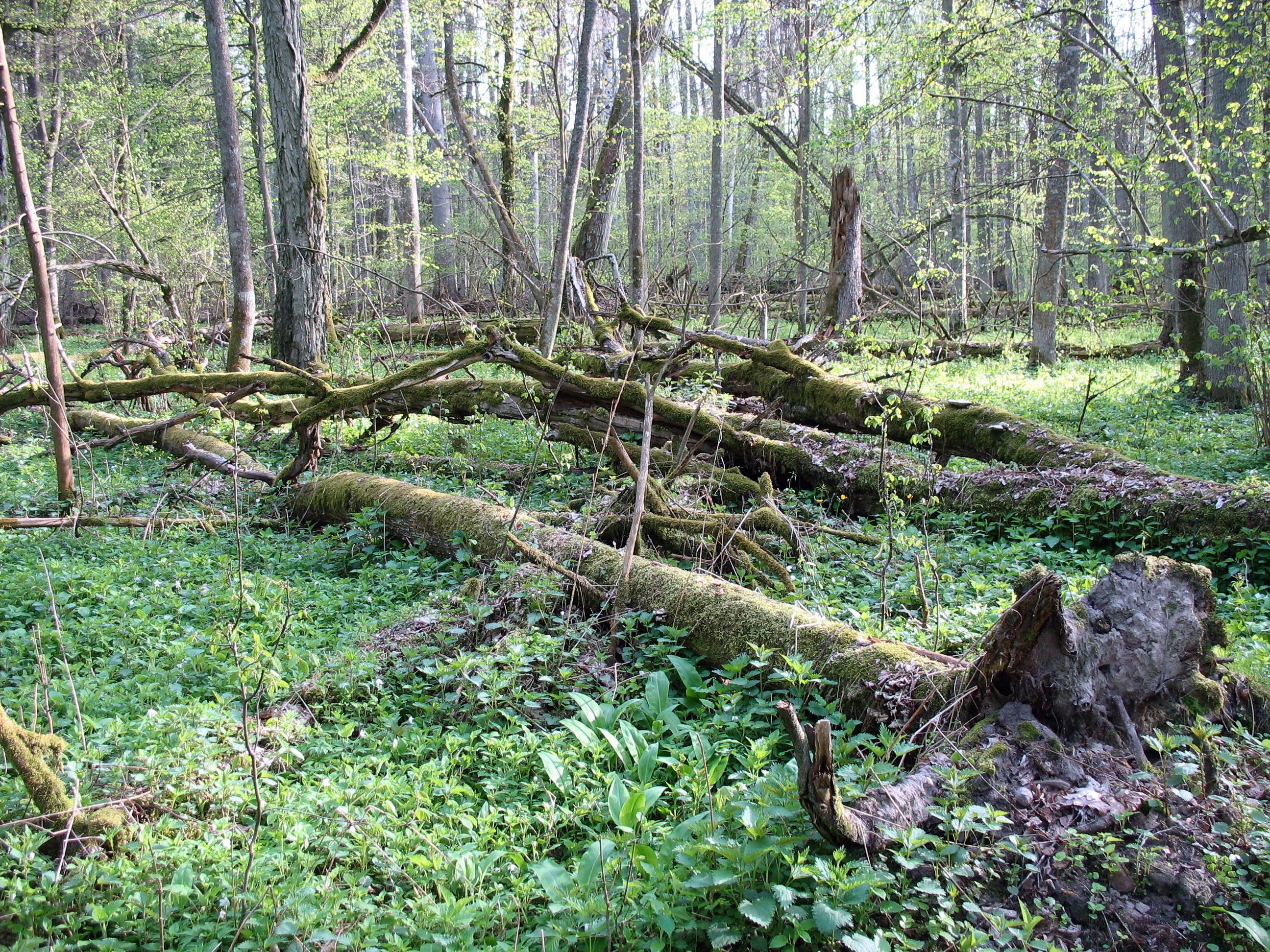 Ogólne zasady konserwatorskiej ochrony przyrody