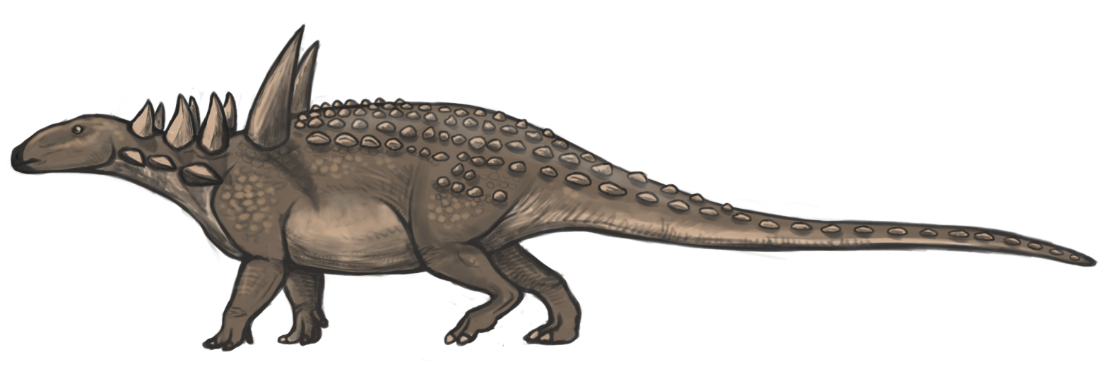 File Sauropelta reconstruction png - Wikimedia CommonsSauropelta