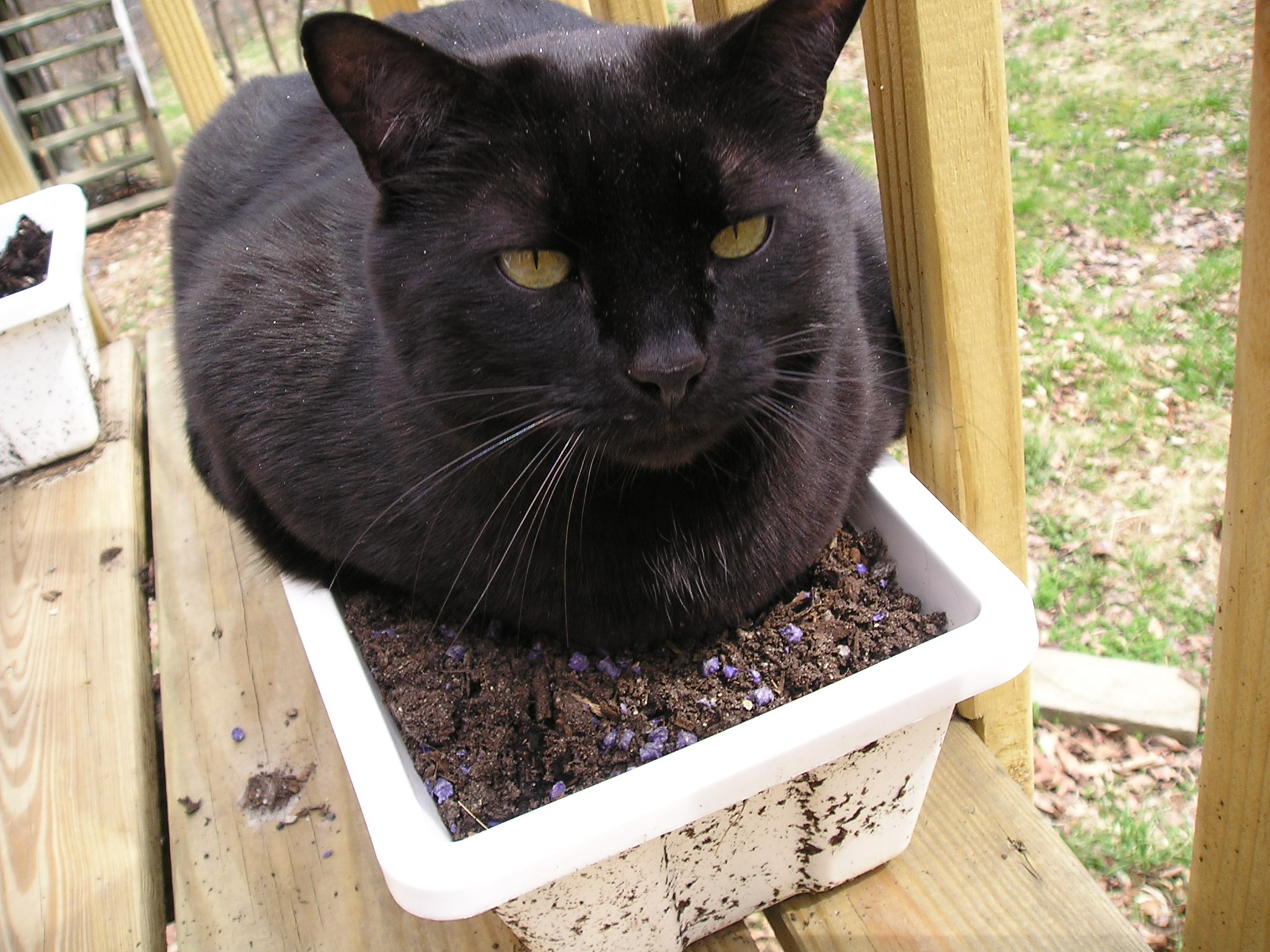 YoruSoi w/Cat Yoru Picture Prompt Fic Challenge Thunder_(black_cat)