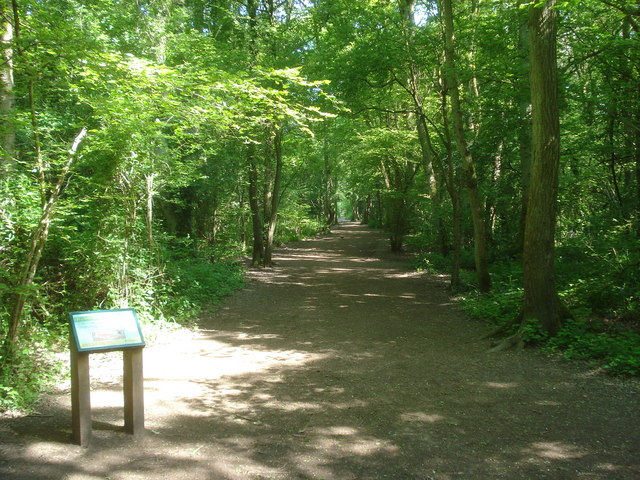 Trail in Nunnery Wood - geograph.org.uk - 839515