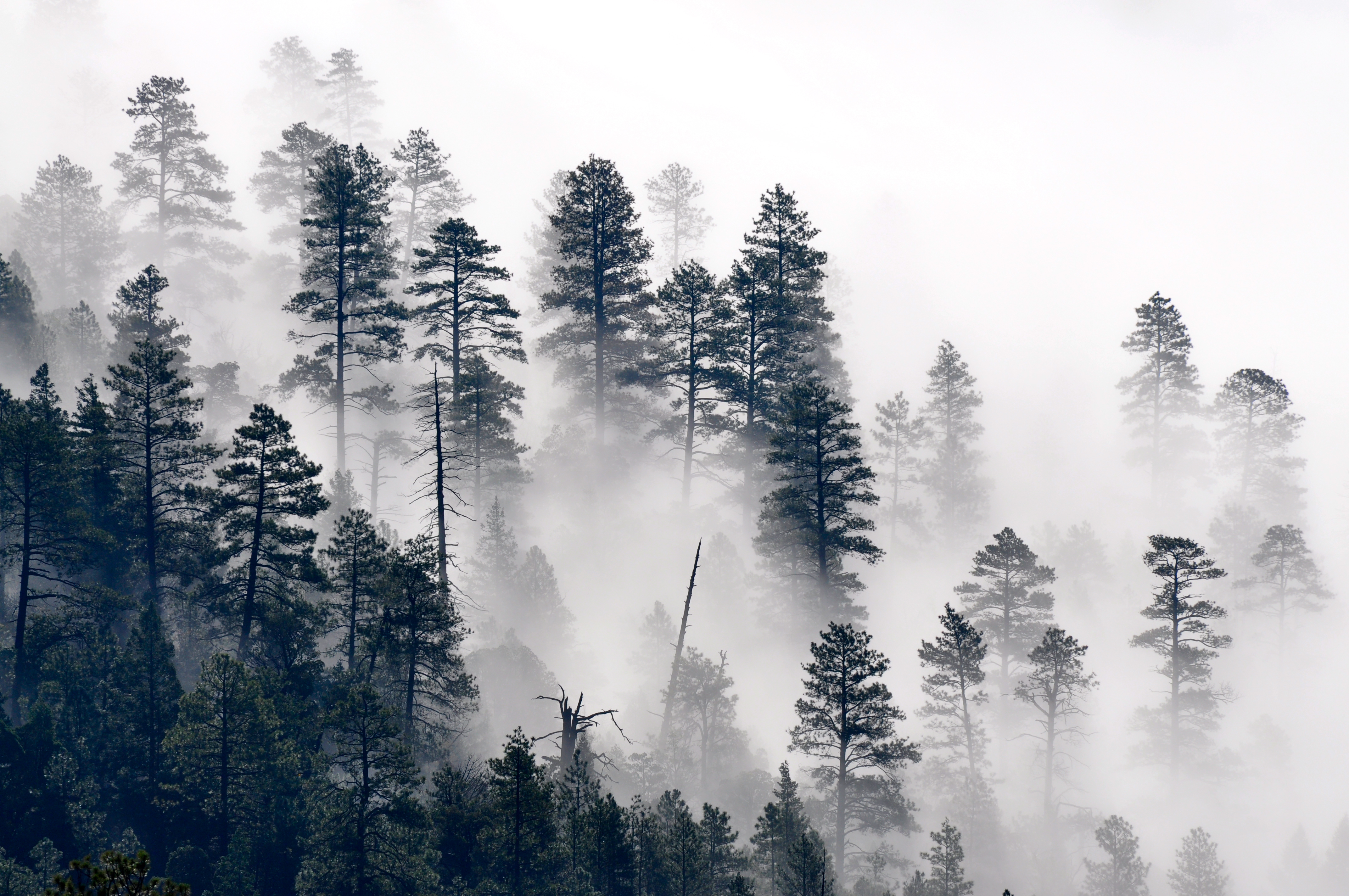 File:Trees in the mist (7699564540).jpg - Wikimedia Commons