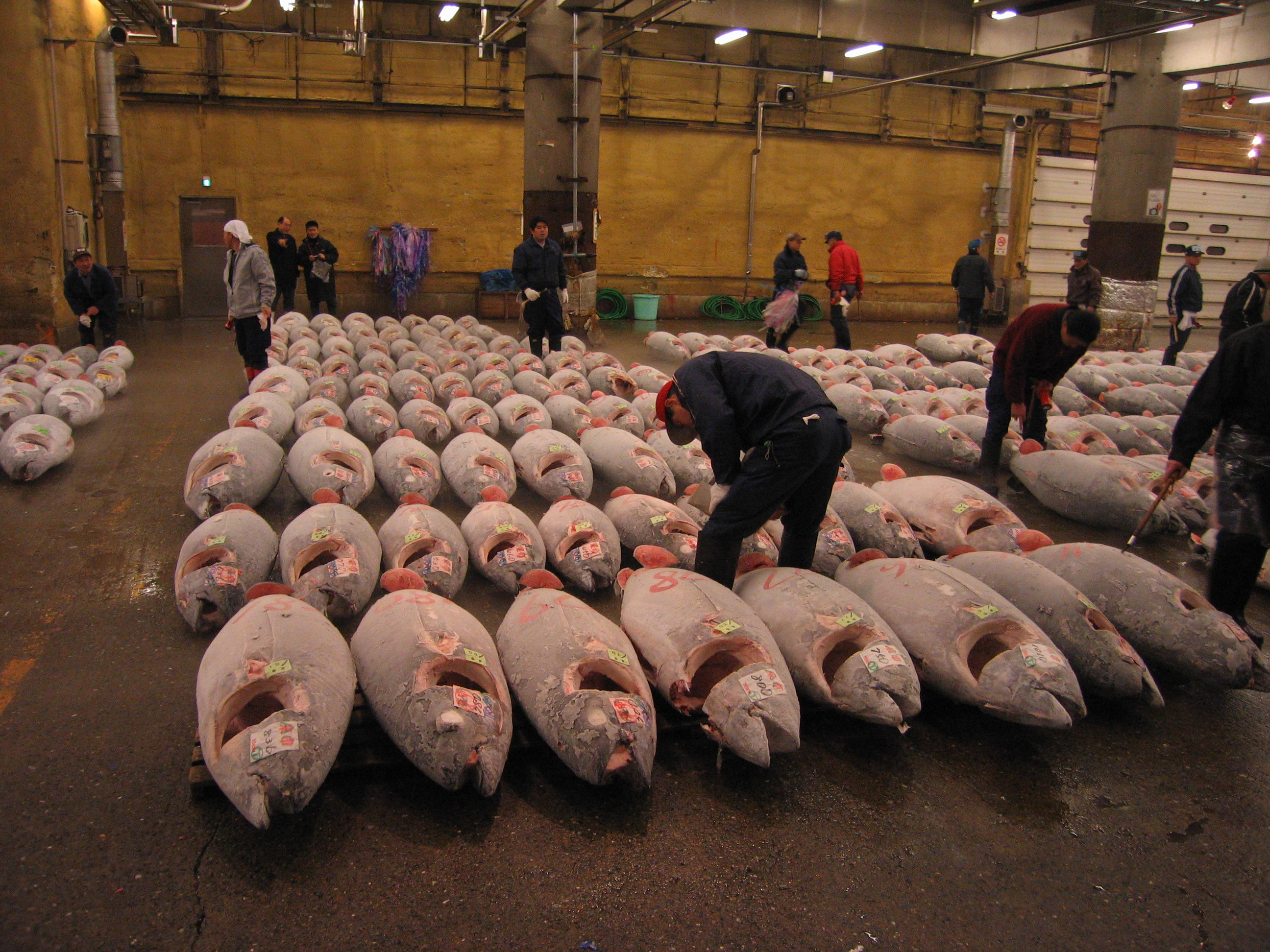 Tsukiji Fish market and Tuna.JPG