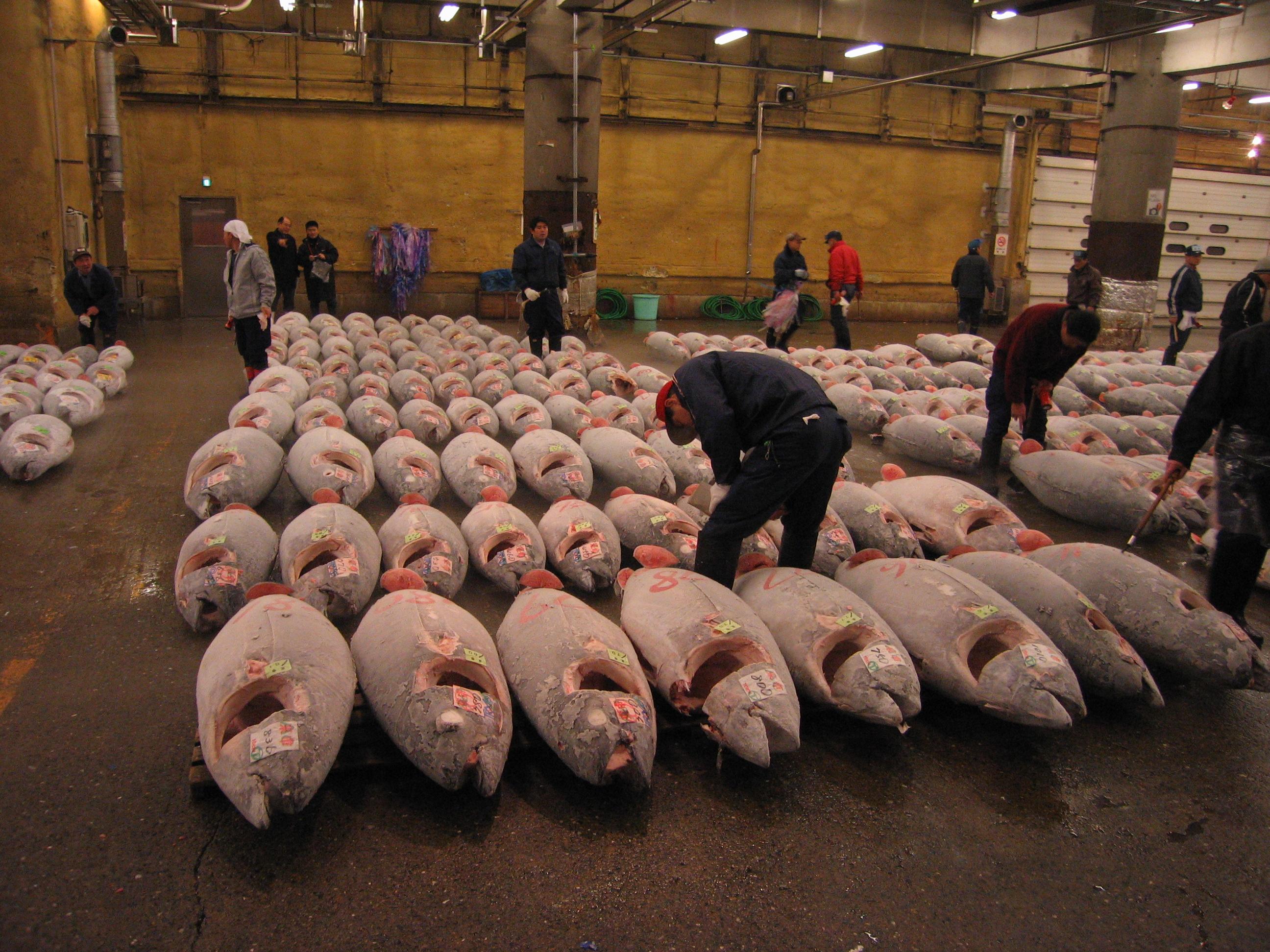 Fish market for Japan fish market