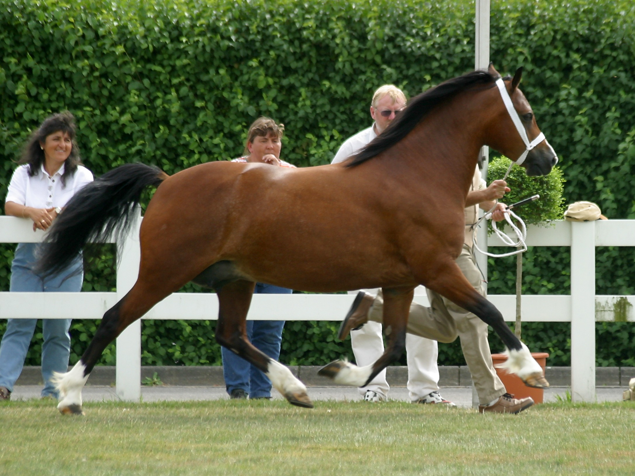 Description Welsh-C-Trot.jpg
