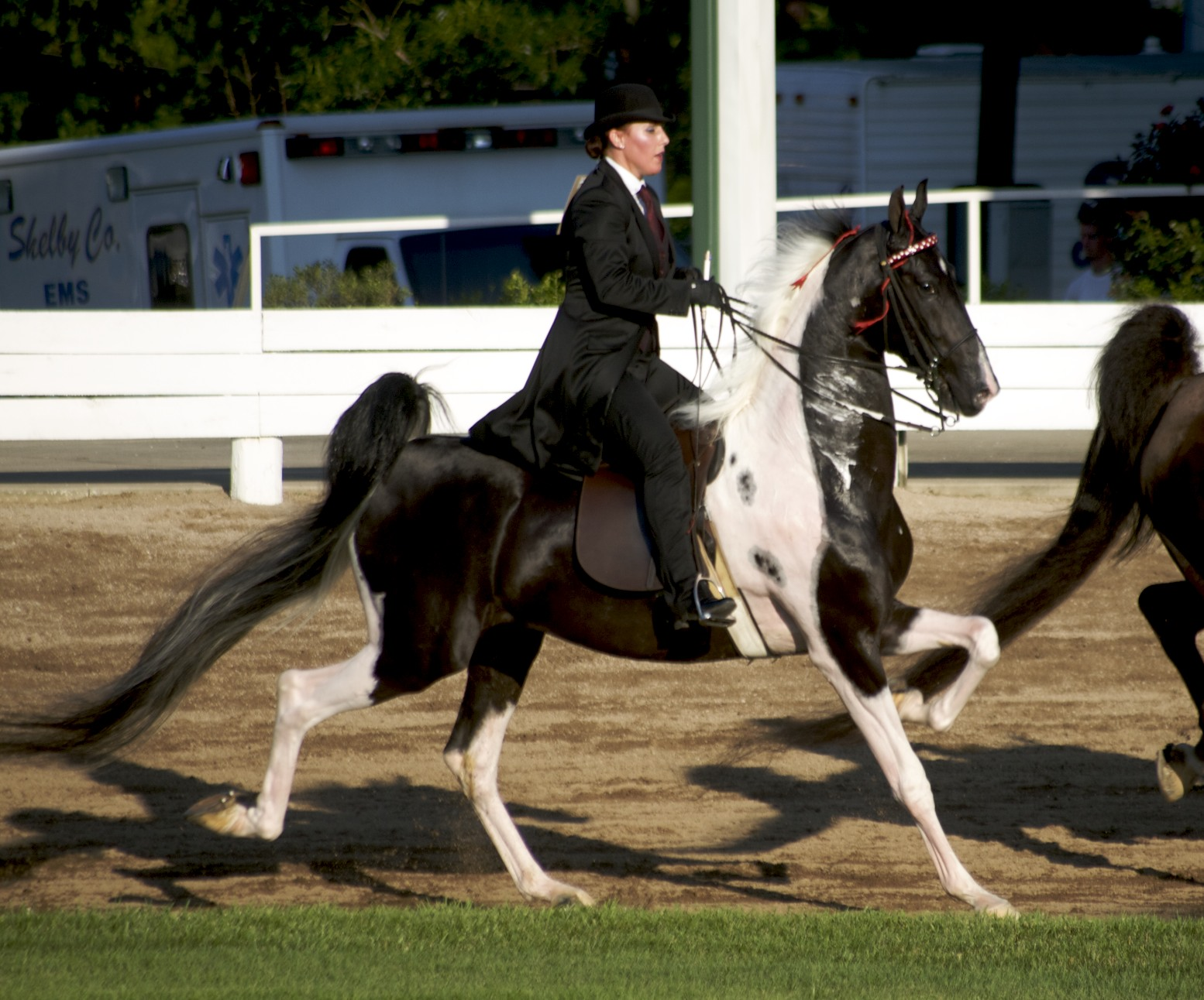 Saddlebred American pinto pictures forecasting dress for on every day in 2019