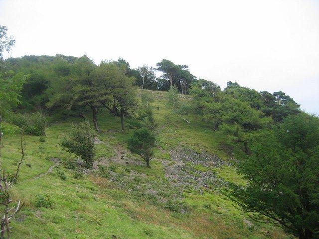 Arnside Knott - geograph.org.uk - 52916