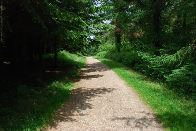 Cann Woods Footpath - geograph.org.uk - 1365876