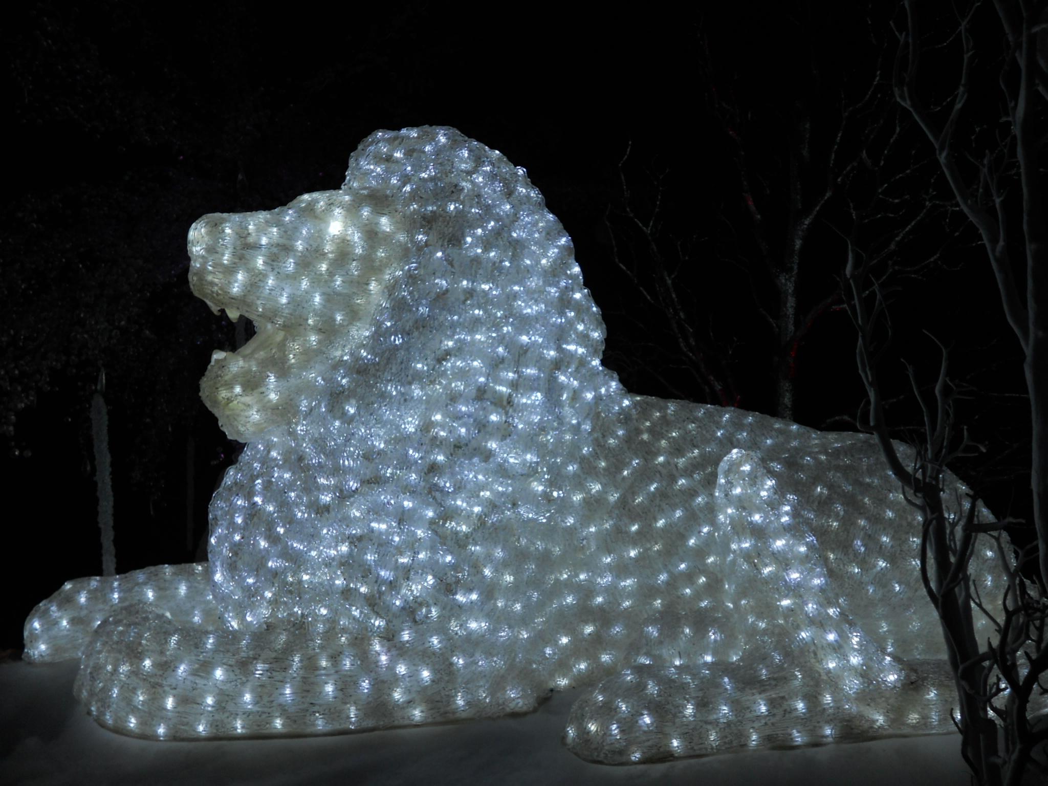 Lowry Park Zoo Christmas.File Christmas Lighting Lowry Park Zoo5 Jpg Wikimedia