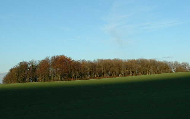 File:Copse at Rackham - geograph.org.uk - 87168.jpg