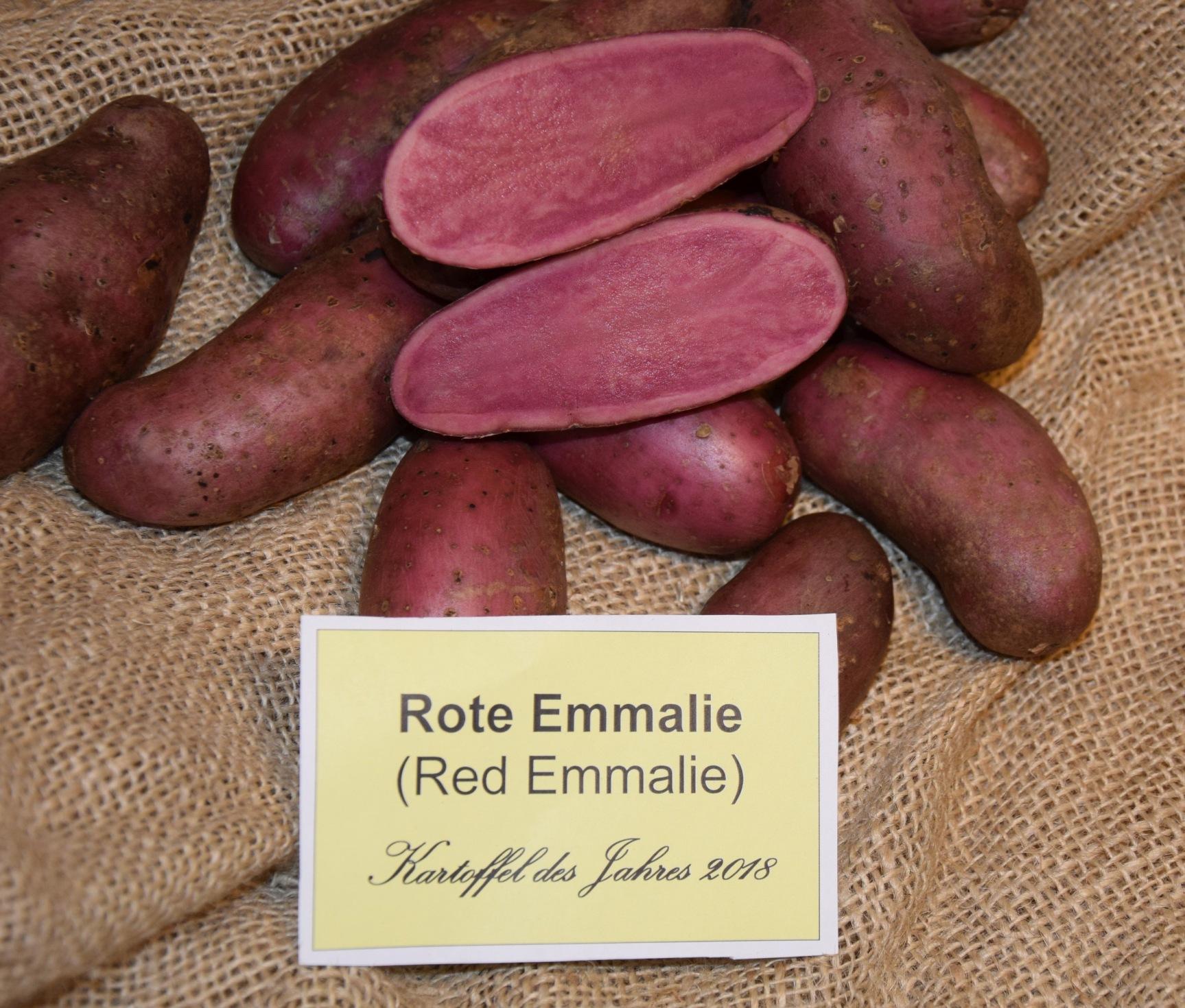 Rote Emmalie Wikipedia