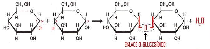 Resultado de imagem para ligação glicosídica