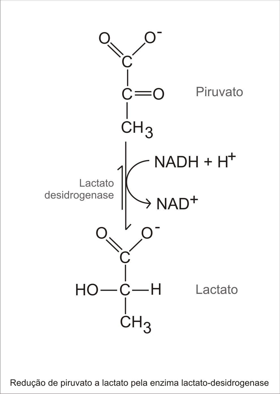 Complejo piruvato deshidrogenasa yahoo dating