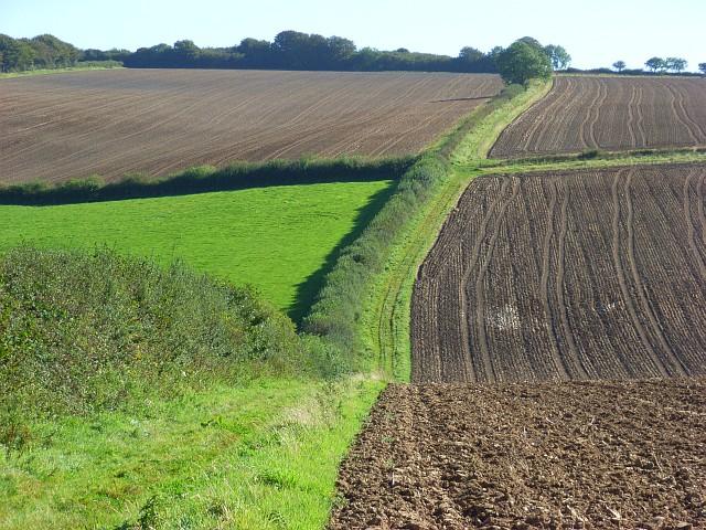 File:Farmland, Beaminster - geograph.org.uk - 558654.jpg
