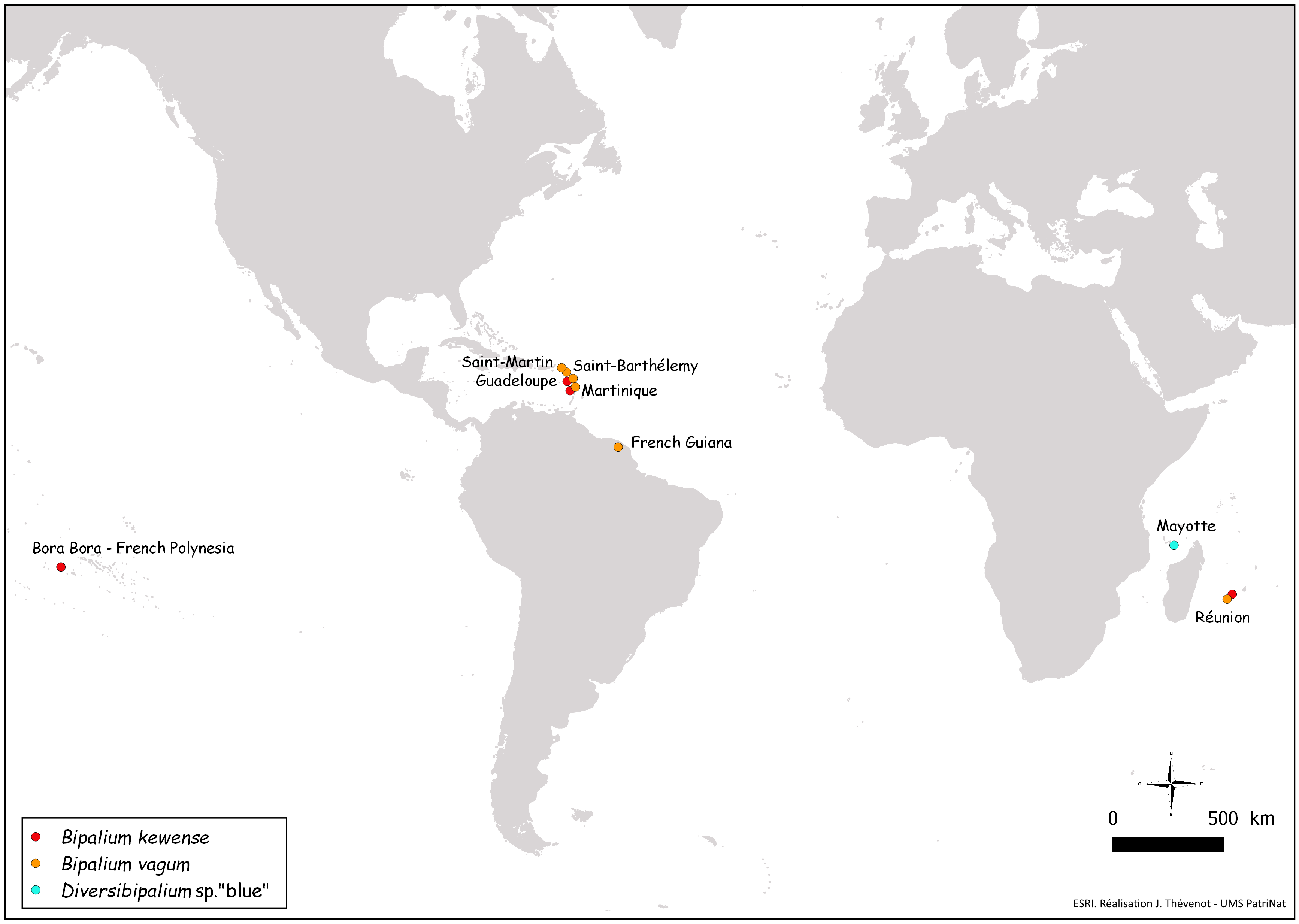 File:Figure 28 (PeerJ 4672) - world map Bipalium.png - Wikimedia Commons