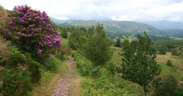 Footpath over Muncaster Fell - geograph.org.uk - 840379