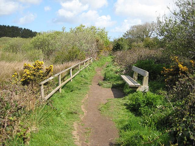 Footpath through Marazion Marsh Nature Reserve - geograph.org.uk - 782134