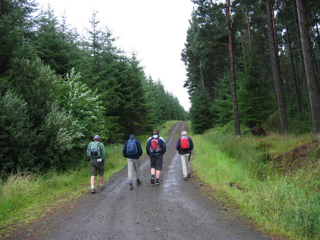 Forest track through Slaley Forest - geograph.org.uk - 213339