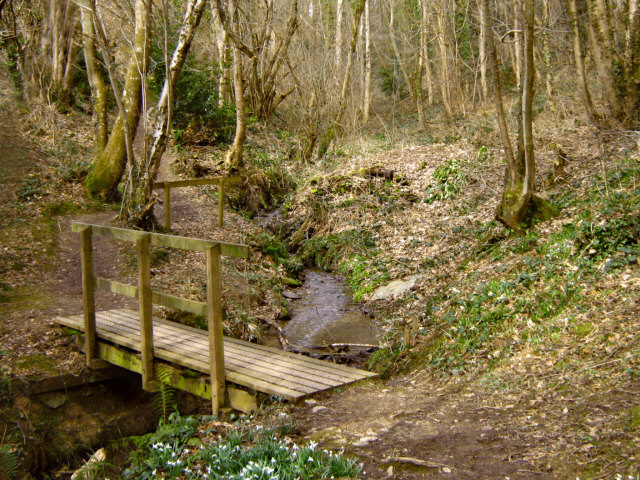 Fyne Court nature trail 4 - geograph.org.uk - 1197325