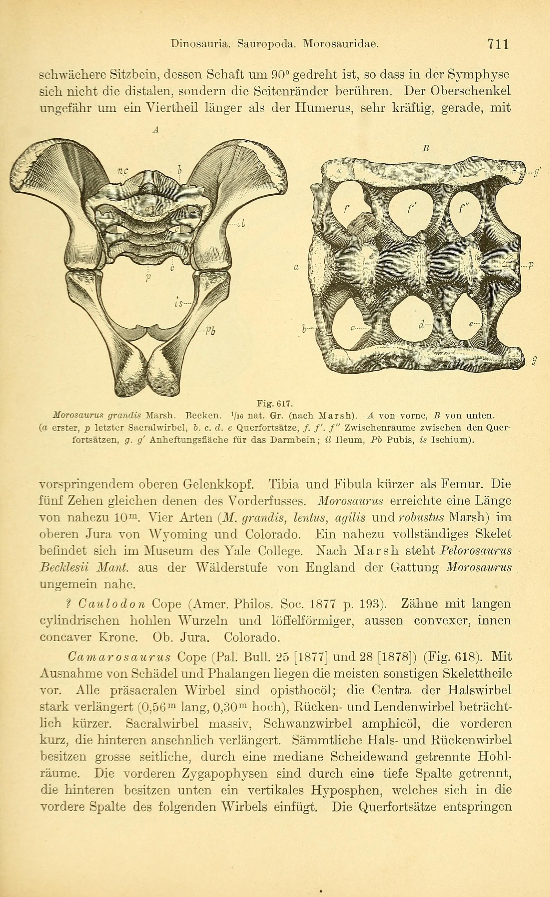 Gemütlich Sacralwirbel Bilder - Menschliche Anatomie Bilder ...