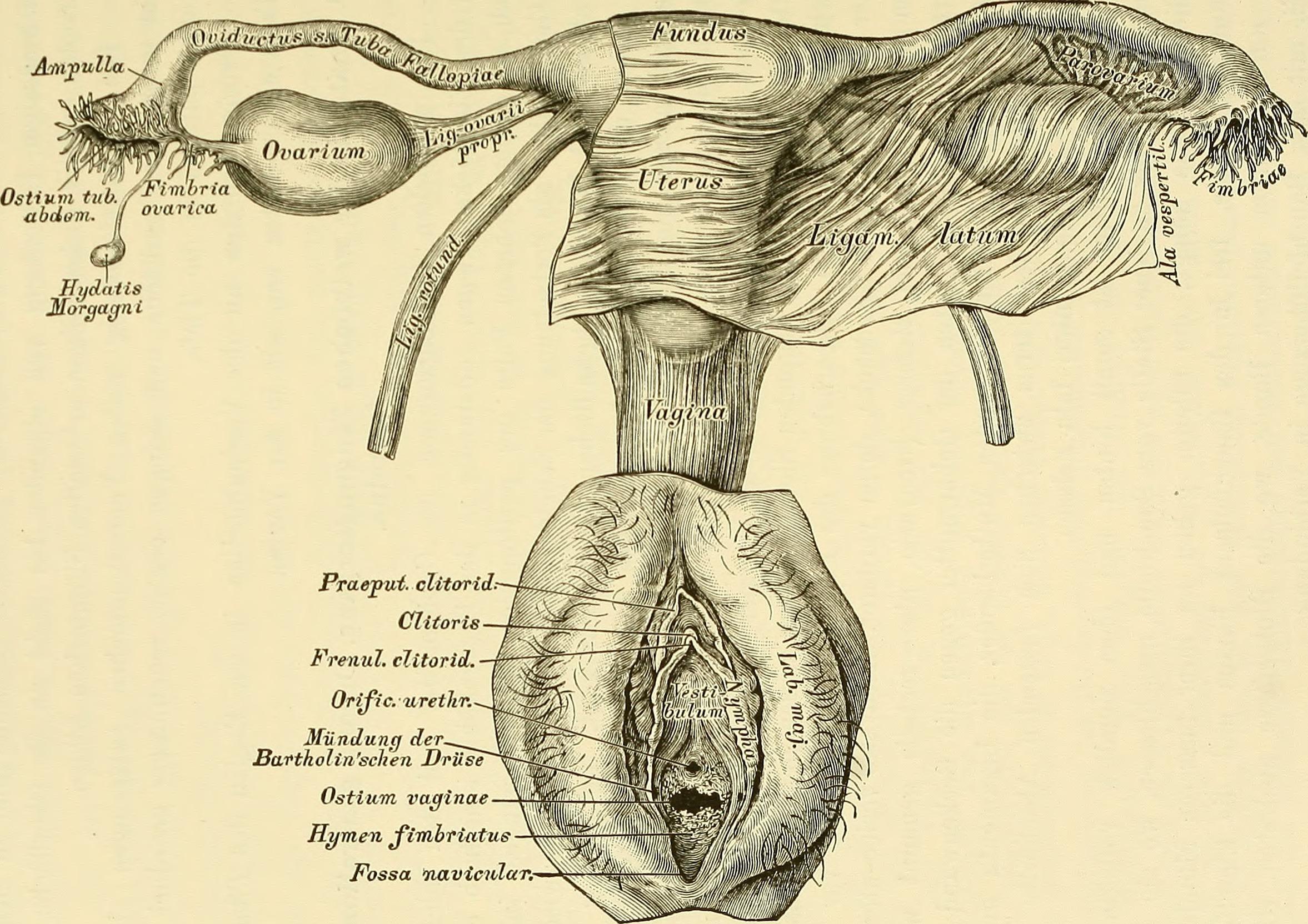 File:Lehrbuch der venerischen Krankheiten und der Syphilis (1888 ...