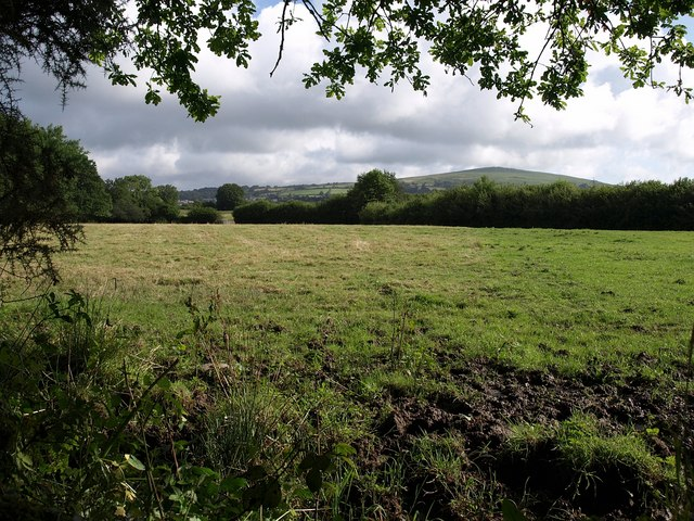 Meadow by the Erme-Plym Trail - geograph.org.uk - 1411300
