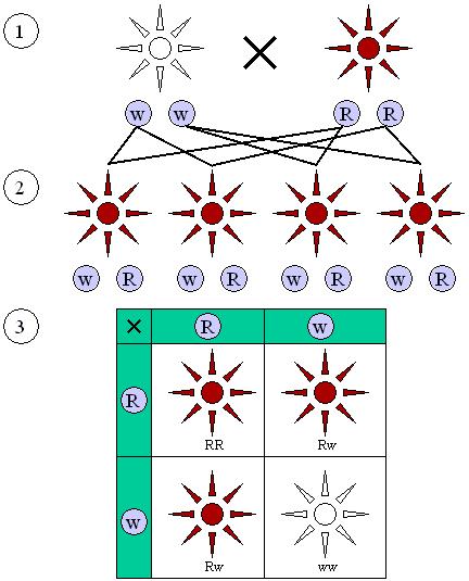 Схема первого и второго закона