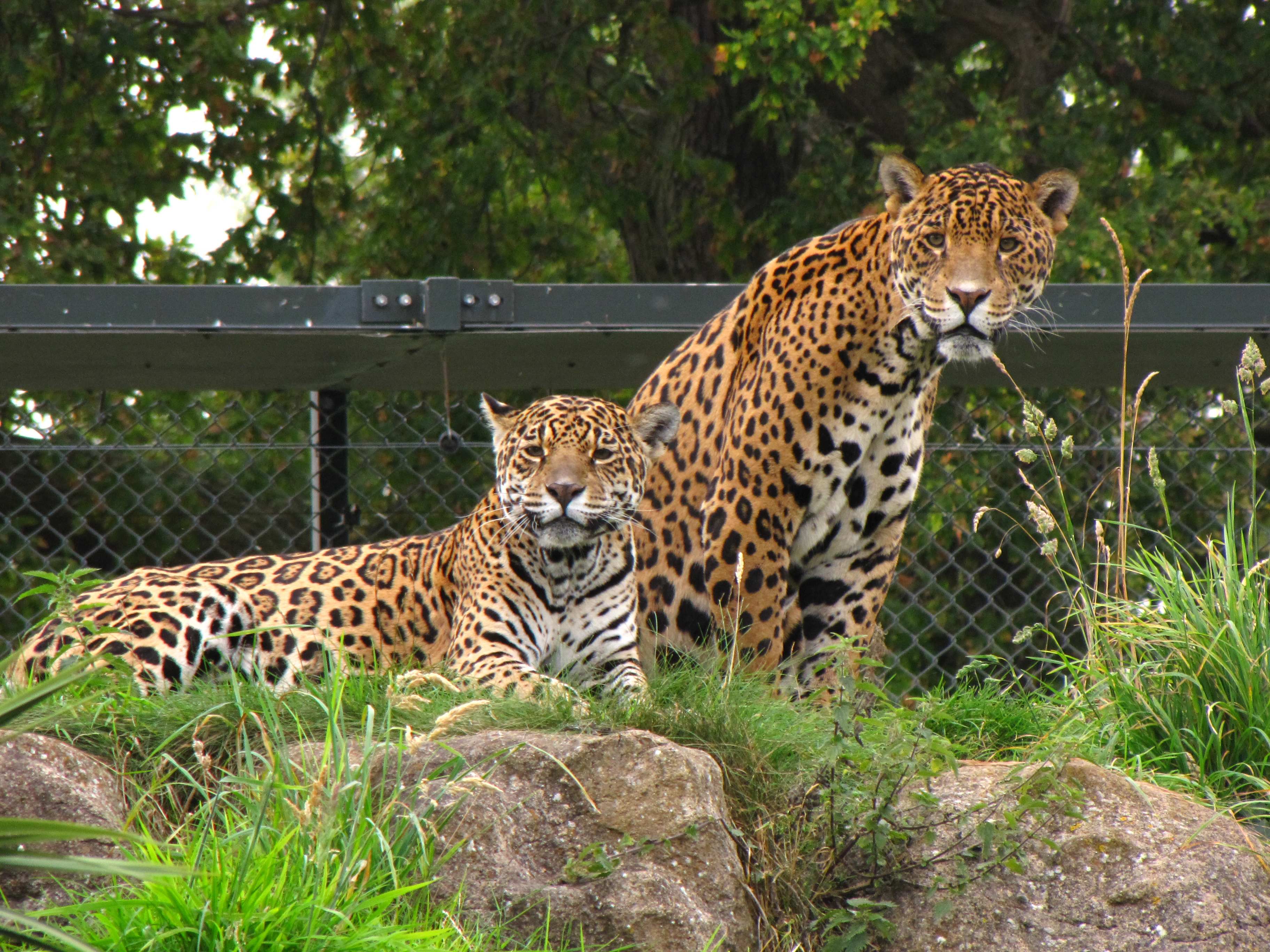 20 videos chester zoo ...