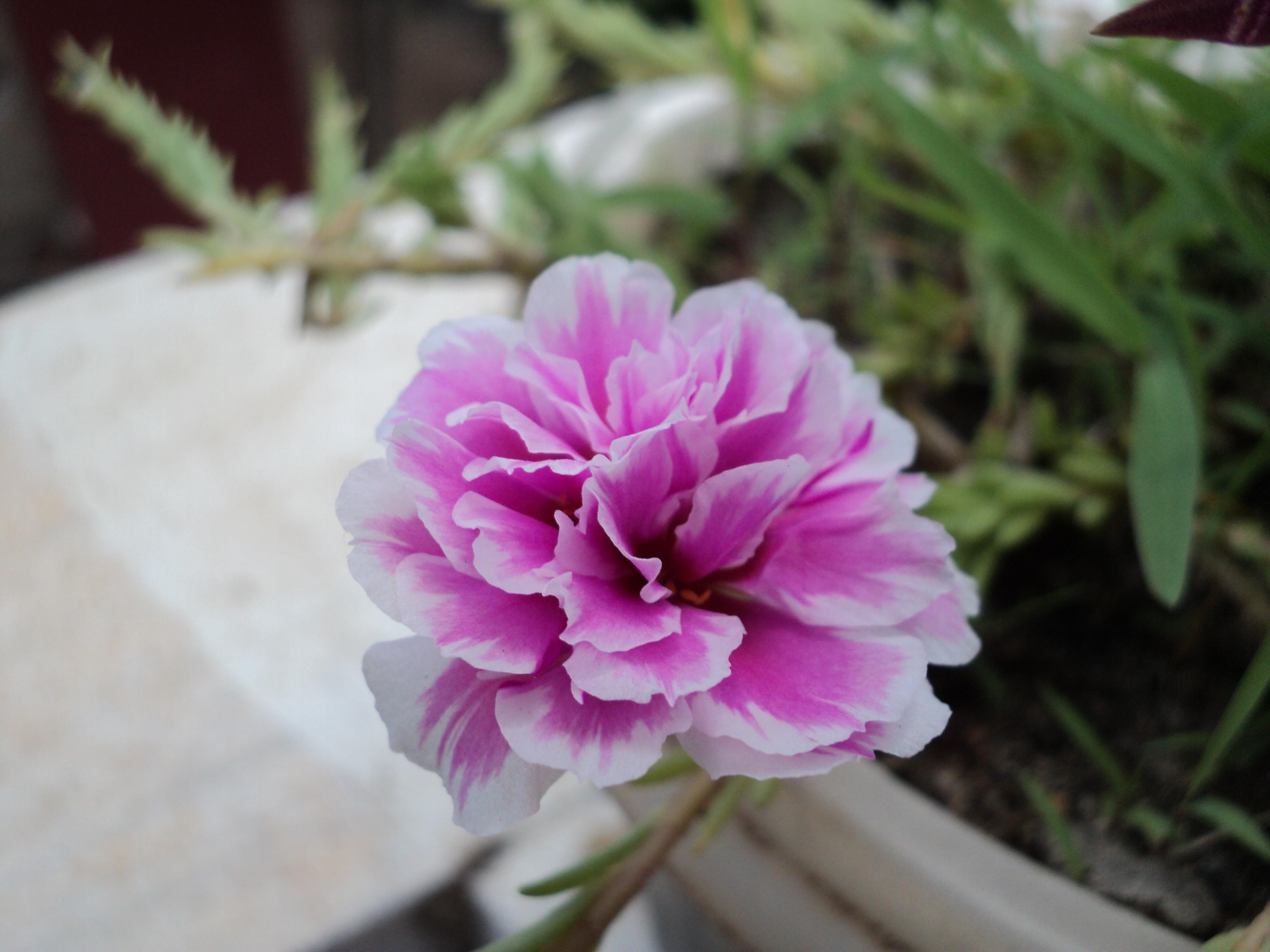 File Pink Flower Small Jpg