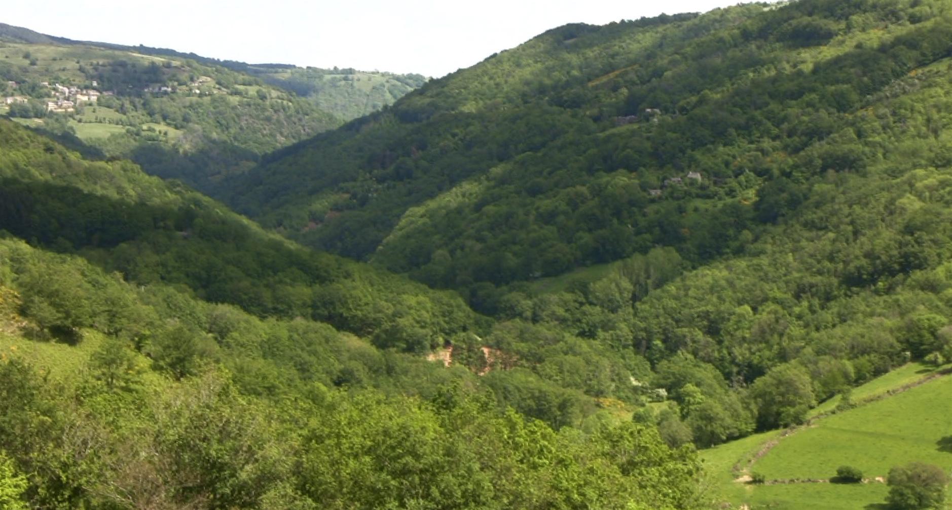 Nature Purpose And Use Of Portuguese Language