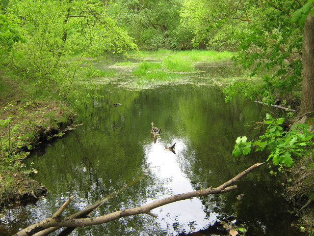 Pond in Farningham Woods - geograph.org.uk - 1302785