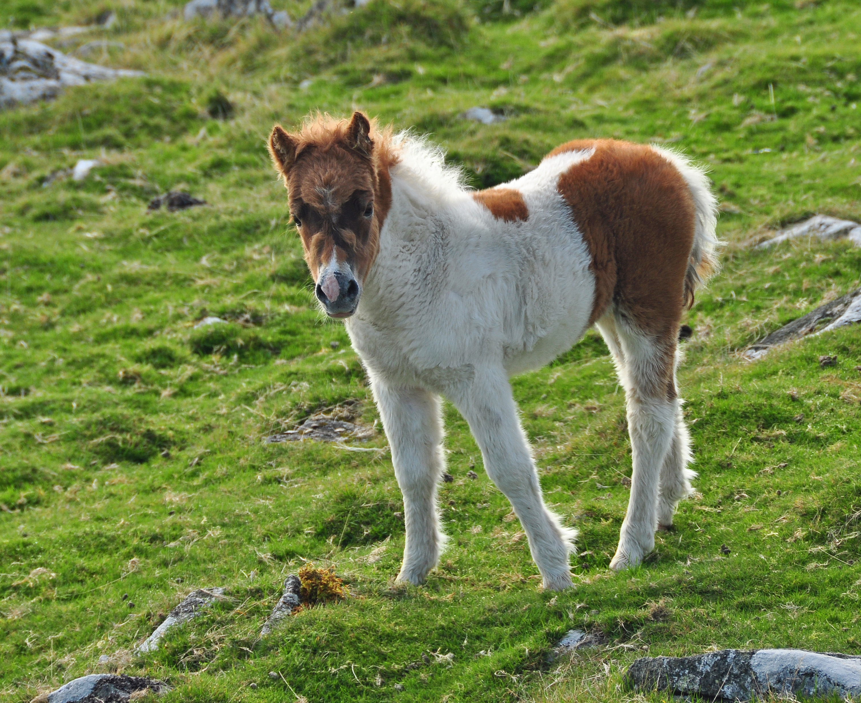 Image Result For Cute Baby Horse