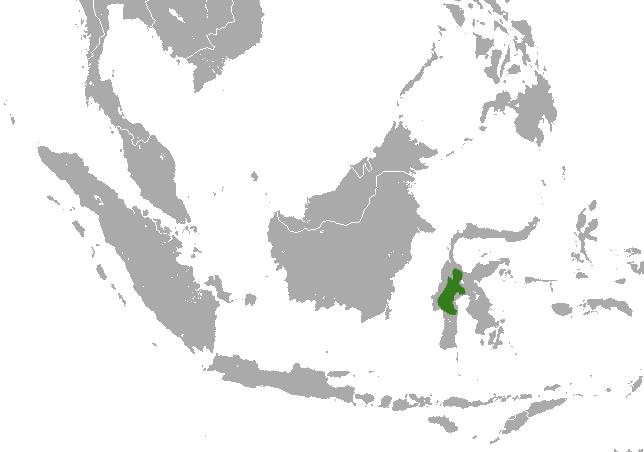 Pygmy Tarsier habitat