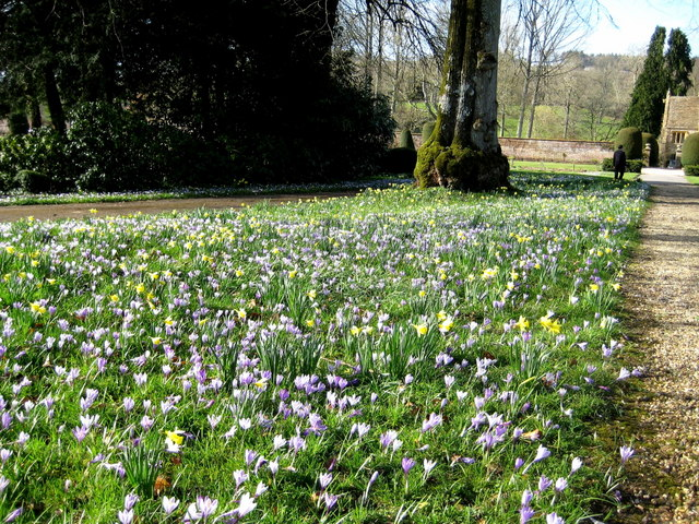 Spring flowers - Forde Abbey - geograph.org.uk - 1203275