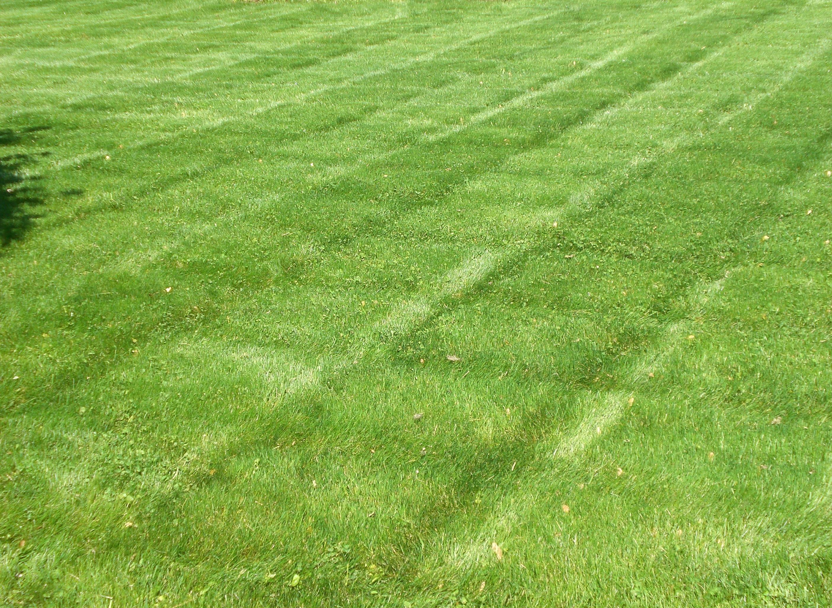 Landscaping Grass Pics : File stripedlawn g wikipedia