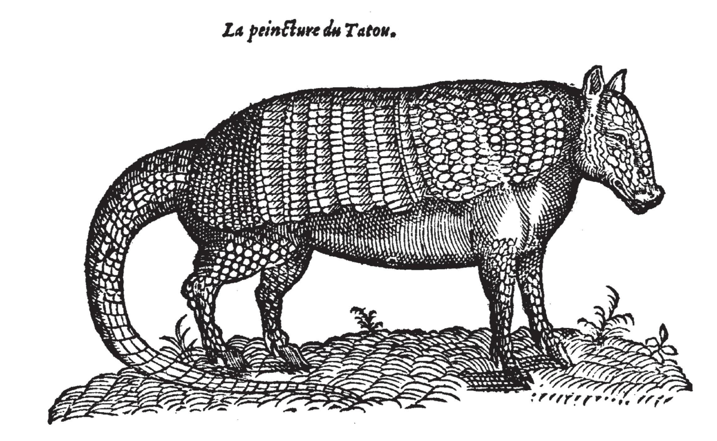 Gürteltiere – Wikipedia