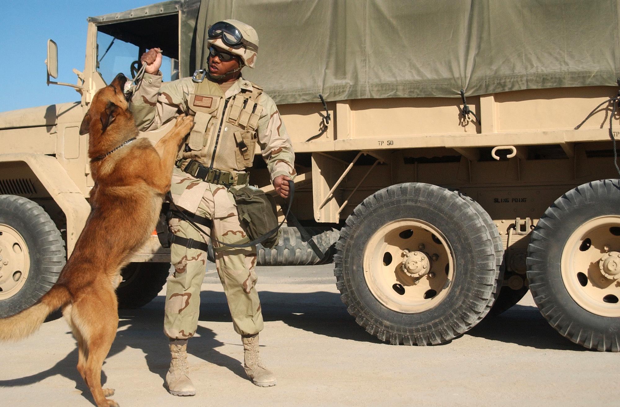 Navy 030302 n 5362a 003 military working dog c patriot kuwait